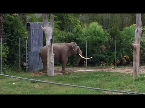 Save Billy the Elephant