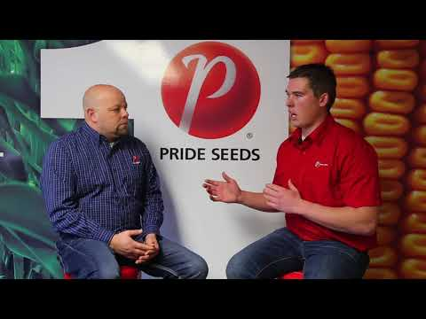 PRIDE Seeds XRN Roundup Ready 2 Xtend® soybeans