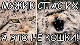 Мужчина Думал, что Спас Обычных Котят, но не тут то было!
