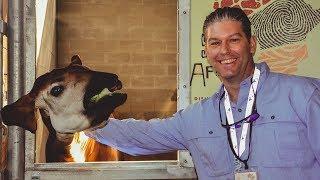Sense of Africa at Disney Animal Kingdom Lodge & Boma #DisneySMMC