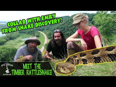 meet-the-timber-rattlesnake!-(collab-with-emily-from-snake-discovery)