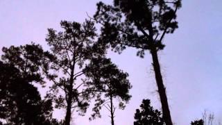 Louisiana Bird Songs