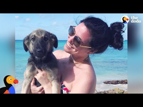 Woman's Vacation Turns Into A Dog Rescue Mission - RUMBA | The Dodo