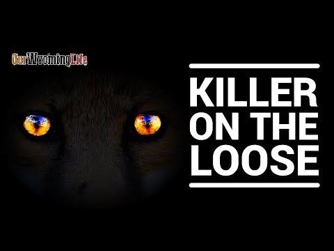 Predators of the Ranch - Mountain Lion, Coyote, Fox, Badger