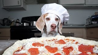 Dog Makes Pizza: Cute Dog Maymo