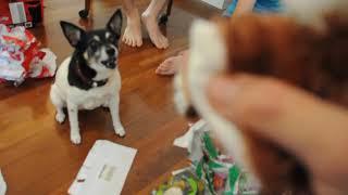 Luckydog 'Tenterfield Terrier' 2012