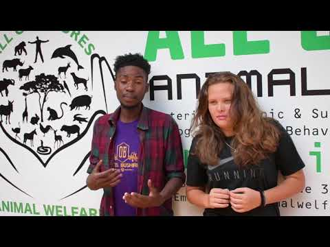World Spay Day Malawi Promo video with Mr. Broken English and Khalidwe