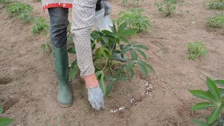Tailored Fertilizer Recommendations for Cassava