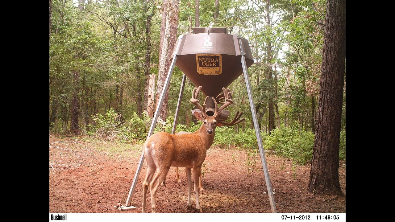 DR. DEER talks about testing Nutra Deer's protein feed ...