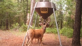 DR. DEER talks about testing Nutra Deer's protein feed.