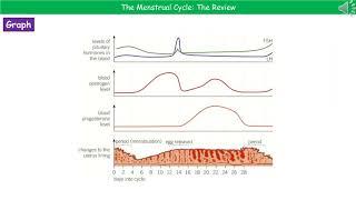 B3.2.3 - The Menstrual Cycle Summary Foundation