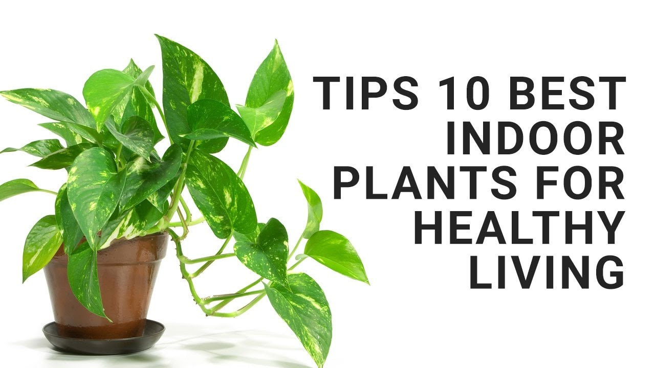 Tips: 10 Best Indoor Plants For Healthy Living - YouTube