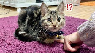 香箱座りしている子猫の隙間に指を突っ込んでみた結果w