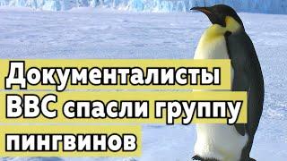 Документалисты спасли группу пингвинов от смерти.