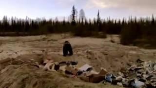 Бурый медведь МИХАЛ ПОТАПЫЧ пришел в гости