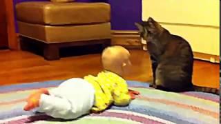 Весёлая подборка кошек  которые защищают детей
