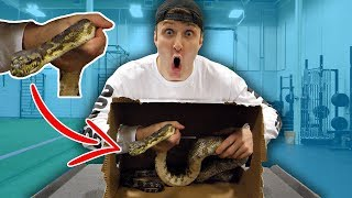 DEADLY WHAT'S IN THE BOX CHALLENGE **LIVE SNAKES**