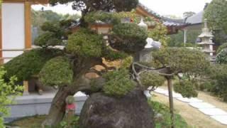 和風庭園.庭作り