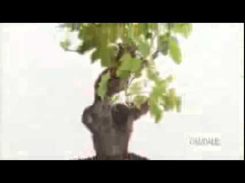 CAUDALIE IL RESVERATROLO DI VITE VINEXPERT   YouTube 144p