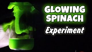 Science Experiment That You Can Do At Home | Glowing Spinach | DIY