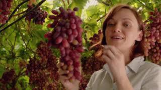 Portugalskie winogrona Crimson z Vale de Rosa - w Biedronce
