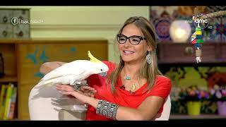 السفيرة عزيزة - أول أكادمية لتدريب الطيور