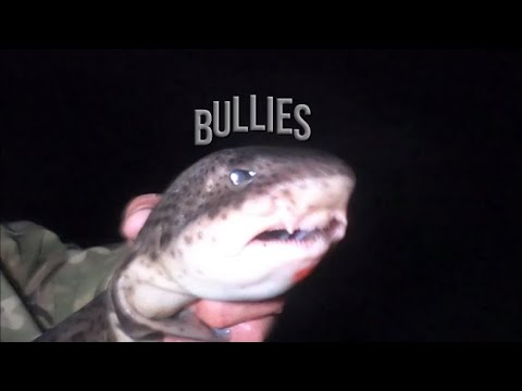 Fal Bullies: Fishing For Bull Huss In The Fal Estuary With Joe Rigley