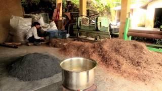 Inde: Le pouvoir des aiguilles de pin