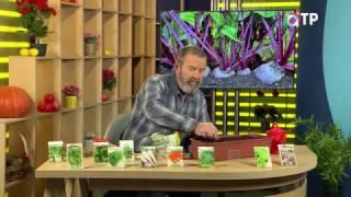 видео Подзимние посевы овощей