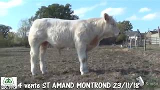 Lot 4 - vente SAINT-AMAND-MONTROND (18) le vendredi 23 novembre 2018 - Simon Genetic