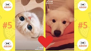 Cute is Not enough #5 Funny animals compilation 2018 Tik Tok