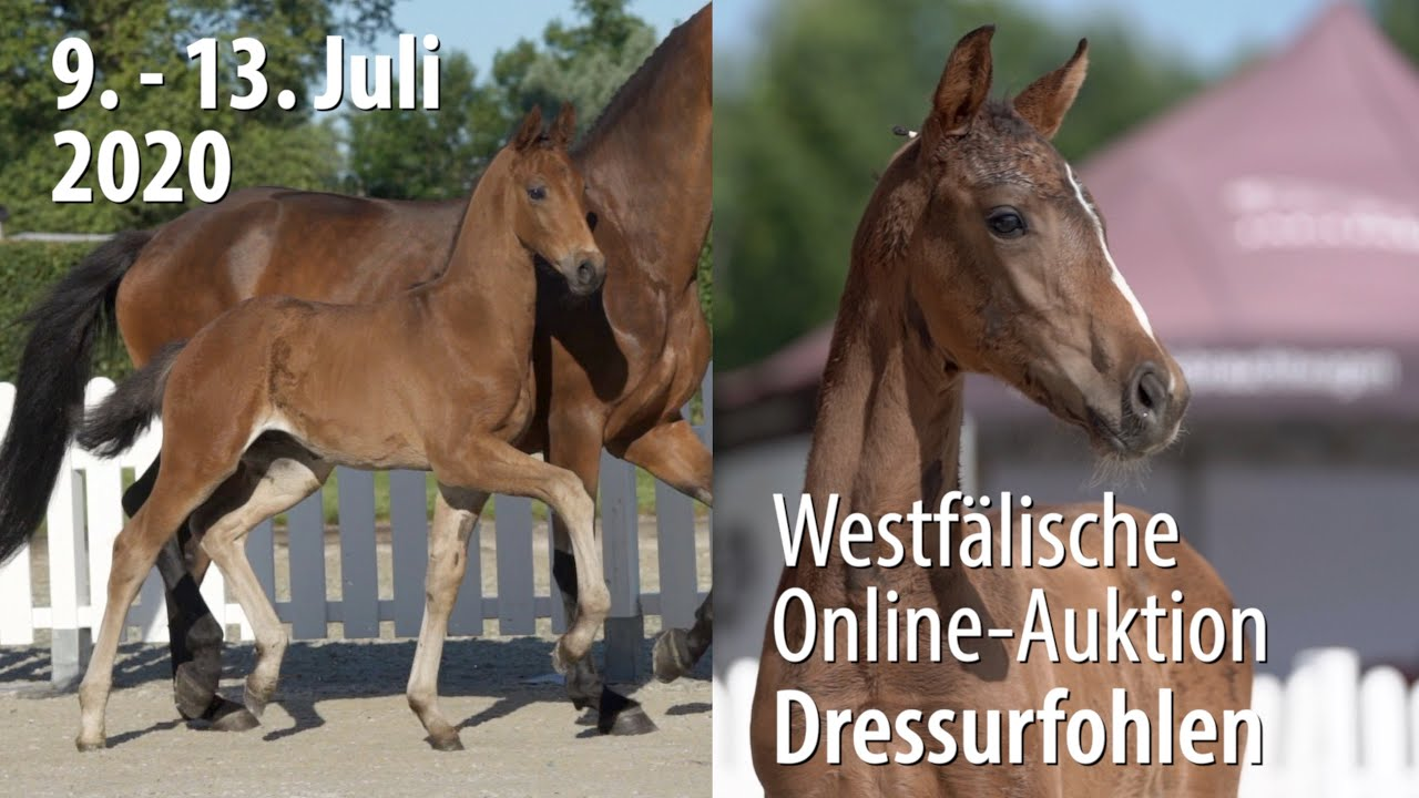 11th Westphalian Online-Auction - Foals for Dressage