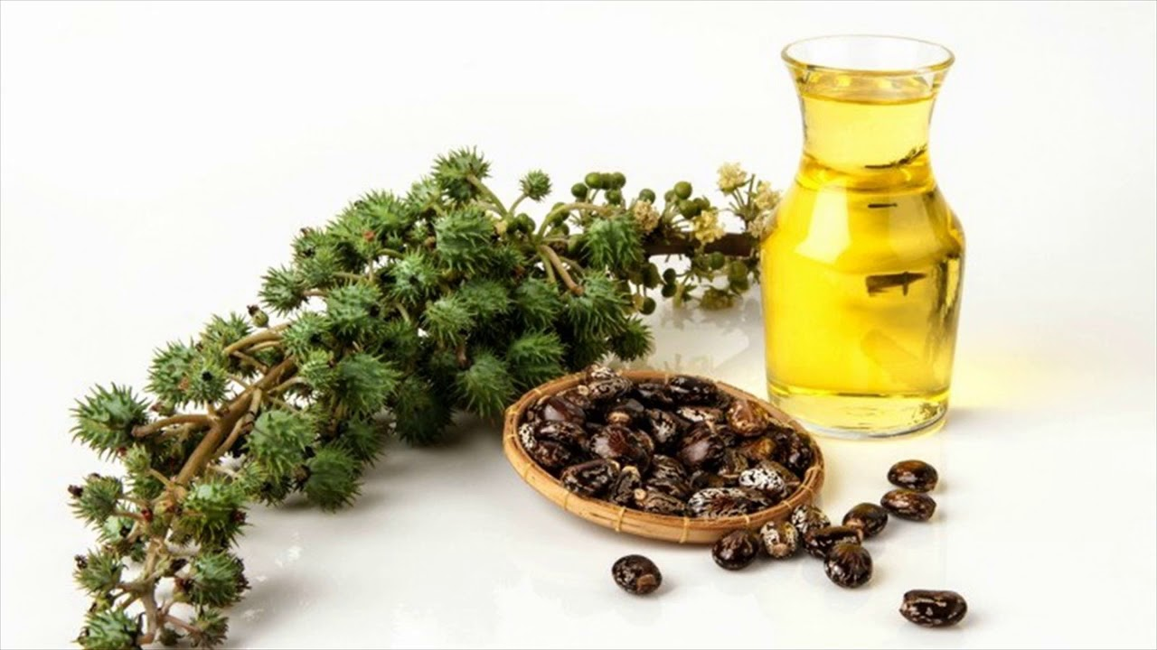 Traditional Remedy For Tailbone Pain Castor Oil To Treat Tailbone