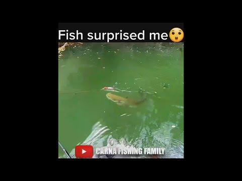 Catfish Surprised Me 🙀 #fishing #silure #catfish #shorts