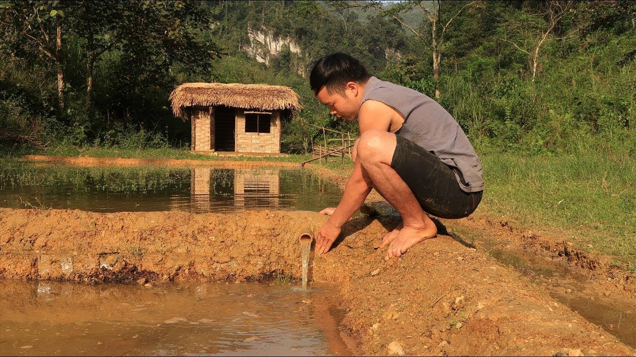 Primitive technology: Farmland, Irrigation (Water supply by bamboo tube for to irrigate rice) Part 2