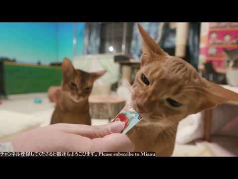 2018.2.15 猫部屋ライブ映像   Cats & Kittens room 【Miaou みゃう】