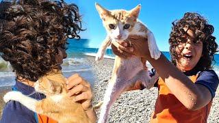 Sami he found a cat on the beach