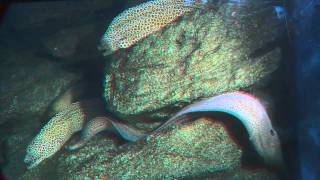 3D Video  - ocean world [HD]