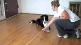 "Cross Paws - Using Post-its ""clicker Training"""