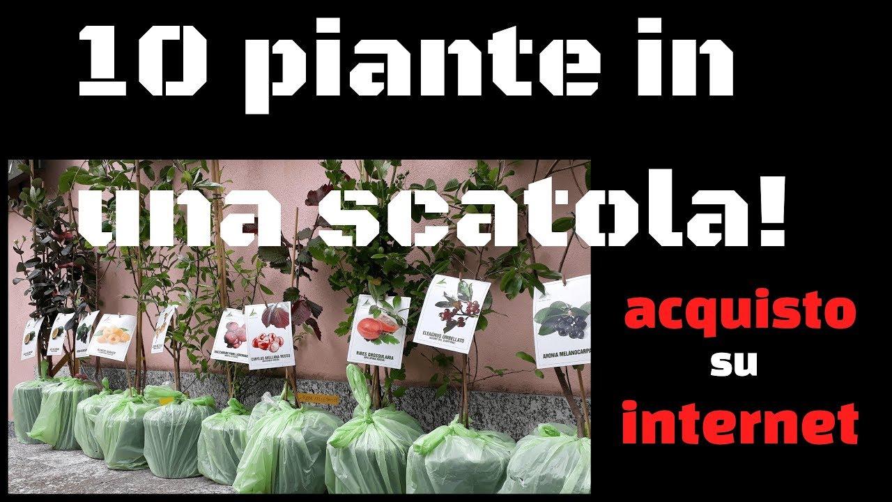Acquisto su internet 10 piante in una scatola youtube for Piante acquisto