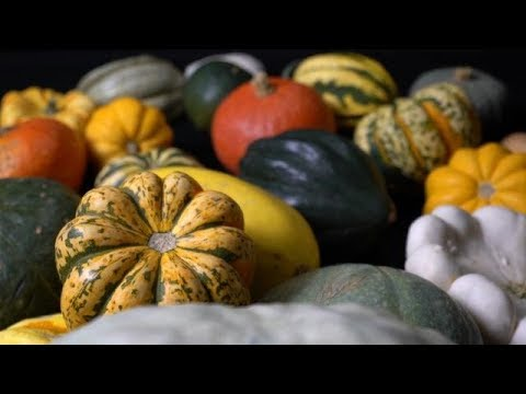 Maize And Pumpkins - Farm To Fork Wyoming