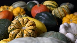 maize-and-pumpkins-farm-to-fork-wyoming
