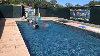 Alaskan Malamute Enke & Weimaraner Jae Having Fun Swimming In A Pool! So Fun To Watch!