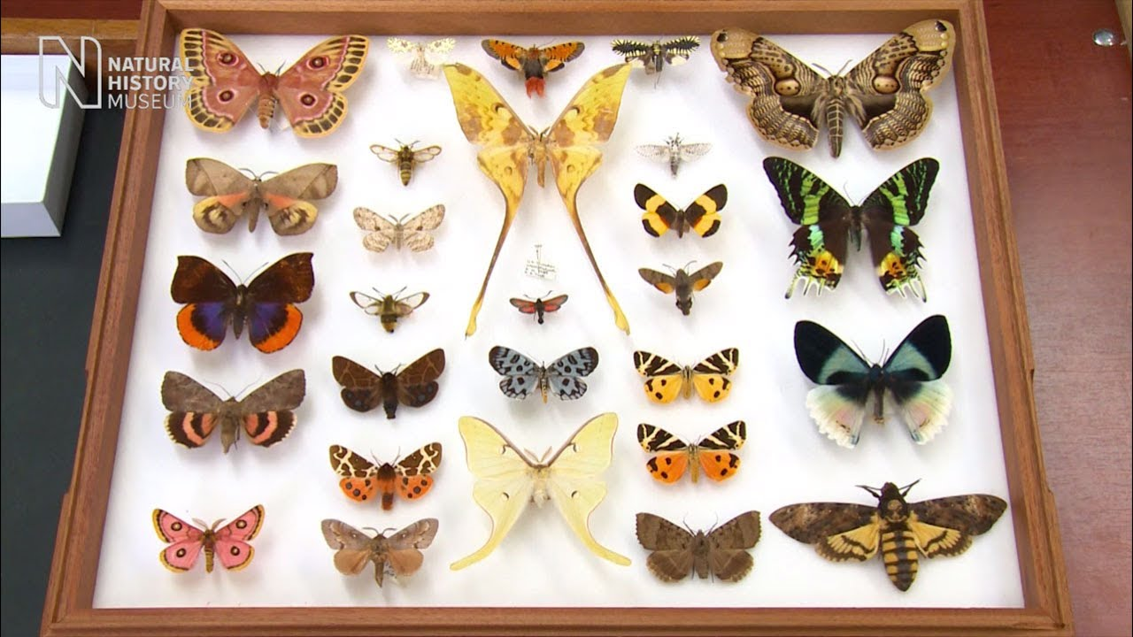 Image result for natural history museum butterflies