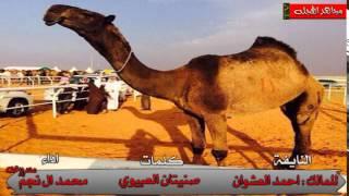 فردية النايفه || للمالك - احمد نداء العشوان