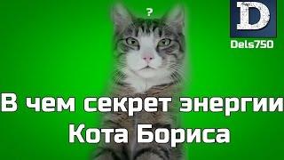 В чем истинный секрет энергии Кота Бориса (RYTP)