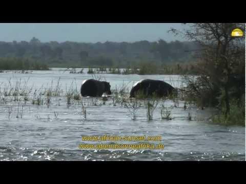 Best of Mana Pools Nationalpark, Simbabwe - © Abendsonne Afrika