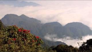 Tuyết Trắng & Đỗ Quyên Đỏ (cover Ngũ Cung) - Vinh Quang