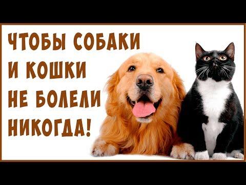 ЛУЧШИЕ КОРМА для Кошек и Собак. Излечение питанием! Веганские и СЕ корма.