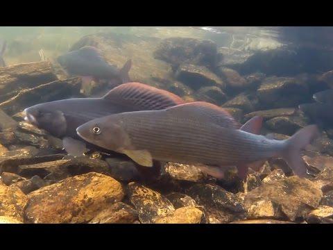 Рыбные рекорды: Как поймать самую большую рыбу, рекордные